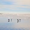 Oceanfront Gathering