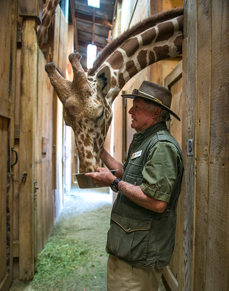 Terry Feeding A Giraffe In The Giraffe Barn
