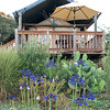 Tent With Agapanthus Plants