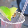 A bee on Connie's empty margarita glass