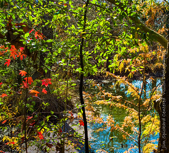 Fall Color at the Botanical Garden