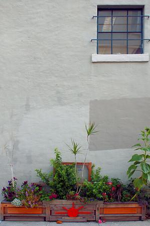Planter and Window  San Francisco, CA  September 19, 2009