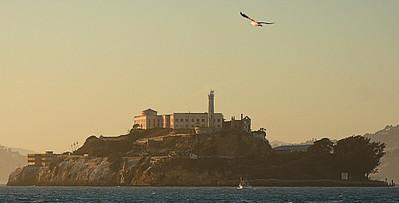 Alcatraz and Bird  San Francisco, CA  September 18, 2009