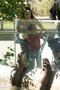 Otters watching humans