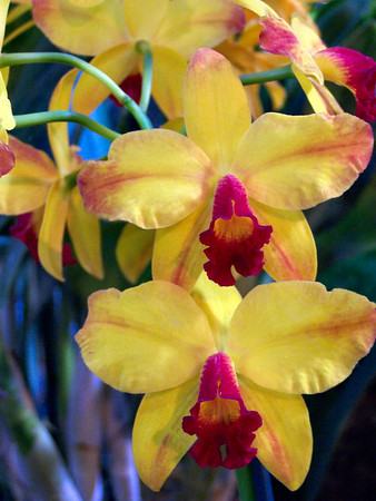 Fort Mason Orchid Show