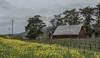 Edna Valley Vineyard area