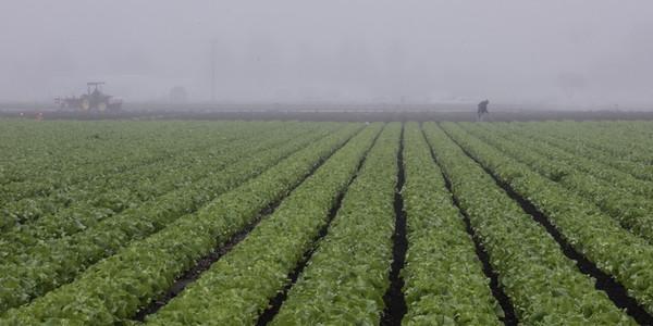 A working farm in San Luis Obispo (taken from my hotel parking lot)
