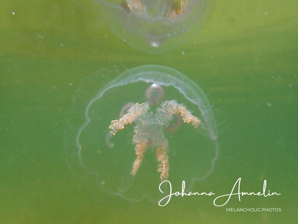 Uitiin eilen meduusojen kanssa, lopussa video!