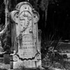 Savannah-1342