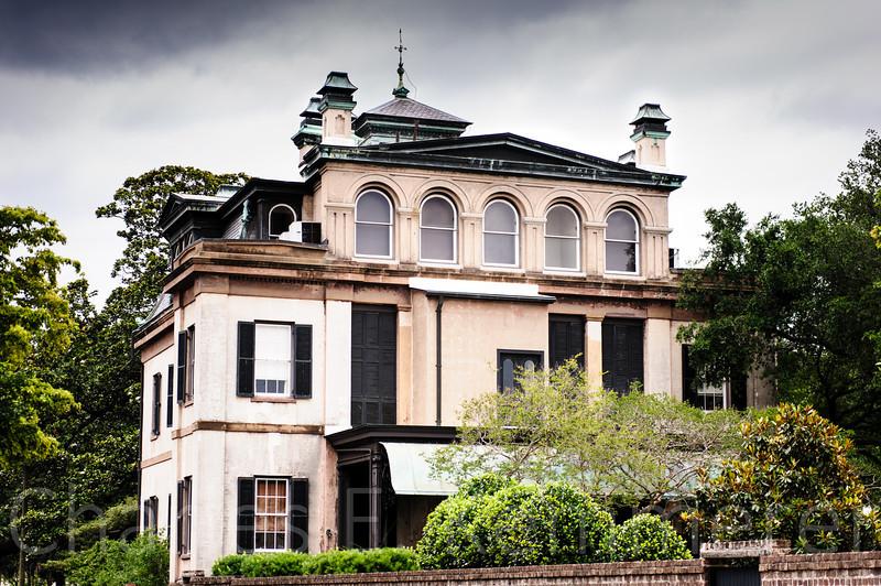 Savannah-1246