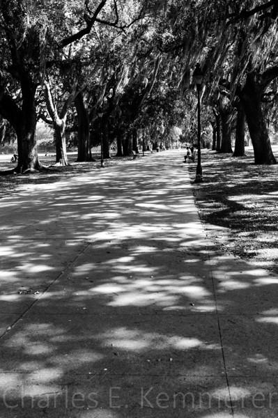 Savannah-1140