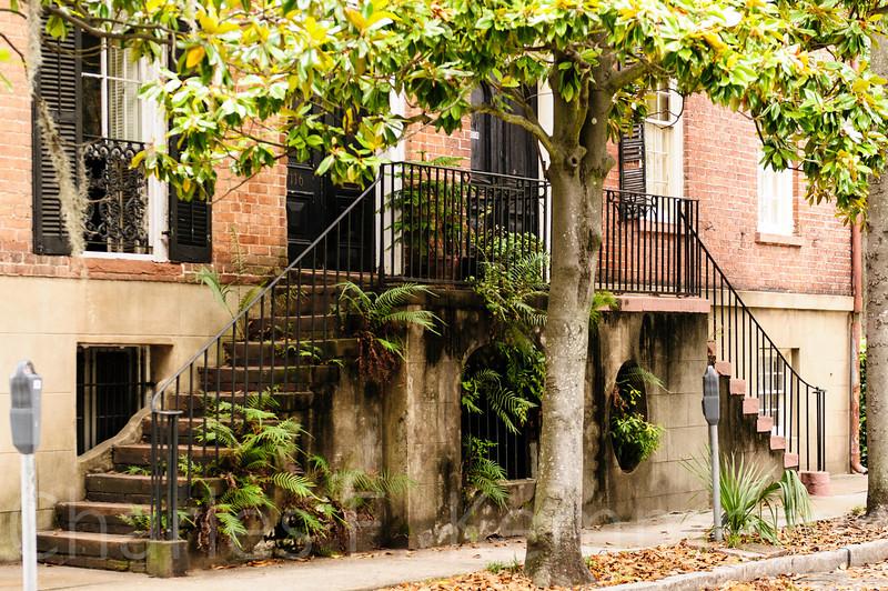 Savannah-1261