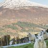 More Cool Sheep