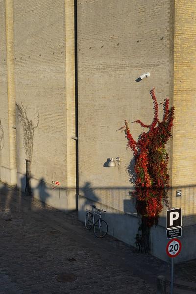 Bikes, Shadows, and Fall Leaves