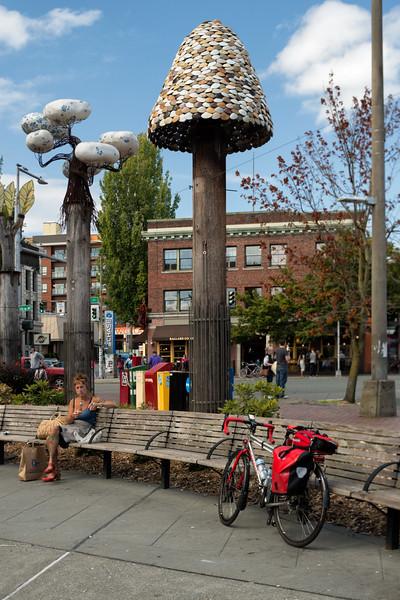 20160806.   Scarlet and Witness Trees in Bergen Park, Ballard District, Seattle WA.
