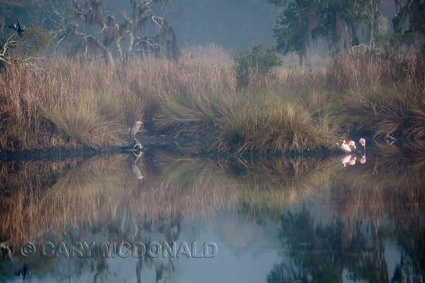 Foggy swamp reflections