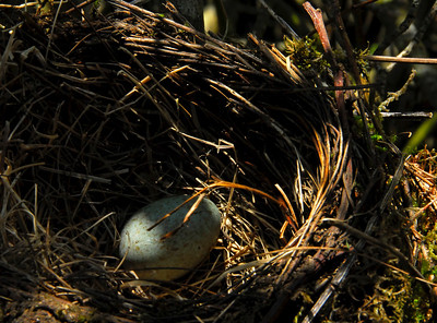 Bird nest and egg - Torosay Castle and Garden, Scotland
