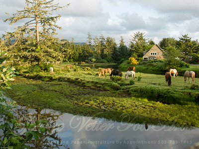"""Grazing at Ecola Creek"""