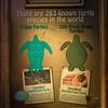 Turtle Fest Exhibit at Sealife Orlando, 21st April 2016 (Photographer: Nigel G Worrall)