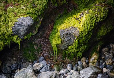 Green Moss Drip