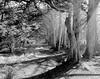 Cypress Break