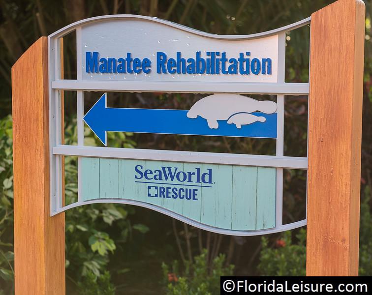 Manatee Rescue & Rehabilitation, SeaWorld Orlando, Florida - 30th March 2016 (Photographer: Nigel G Worrall)