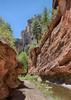 West Fork Trail in Oak Creek Canyon.