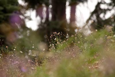 110911_Sequoia_8