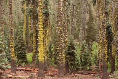 110911_Sequoia_6