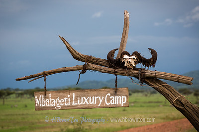 Almost at the Mbalegeti Luxury Camp -- Serengeti National Park