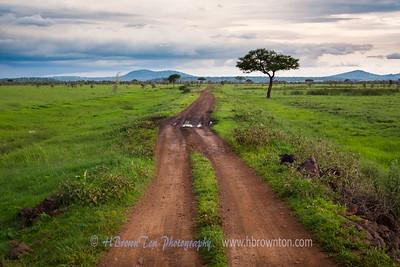 The road through the Serengeti