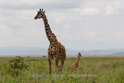 Mother and Child -- Serengeti National Park