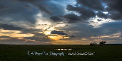 Nearing dusk on the planes of the Serengeti