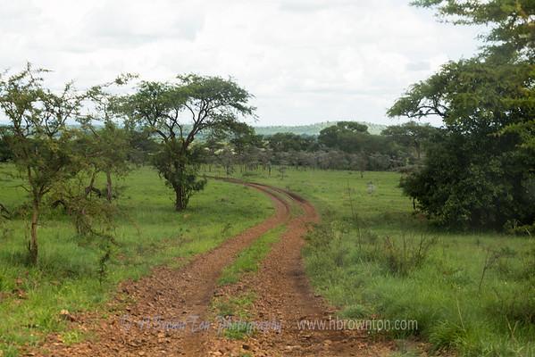 Serengeti Road