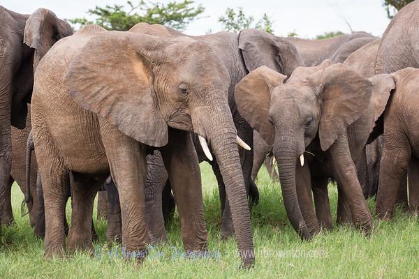 Elephant Party on the Serengeti