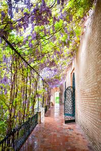 Flowers in the Alcazar of Seville