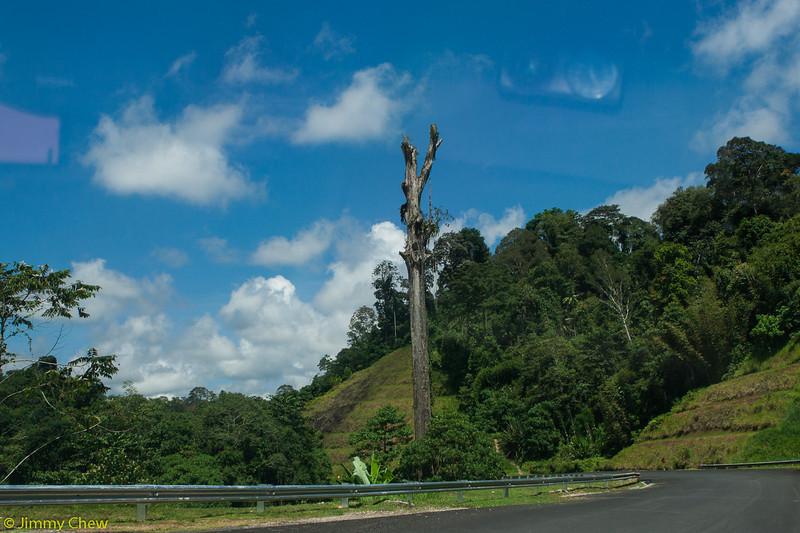 Standalone tree.