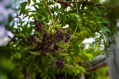 ShangriLa_18_May_2012_193-Edit