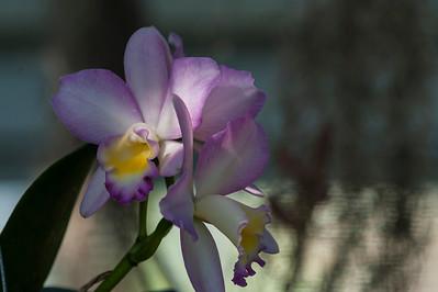ShangriLa_18_May_2012_046-2