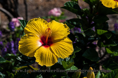 untitled_22_May_2012_062