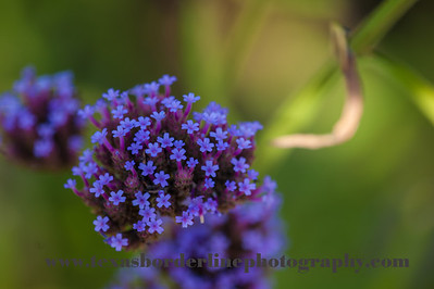 untitled_22_May_2012_002