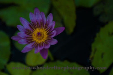 untitled_22_May_2012_112
