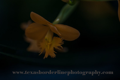 untitled_22_May_2012_092