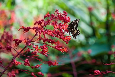 Shangri La-June-21-2012-101-32