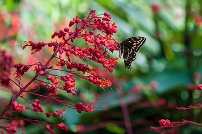 Shangri La-June-21-2012-101-33