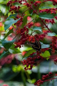 Shangri La-June-21-2012-101-35