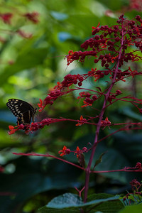 Shangri La-June-21-2012-101-34