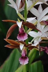 Shangri La Botanical Garden,Orange,Tx. 3-11-2010