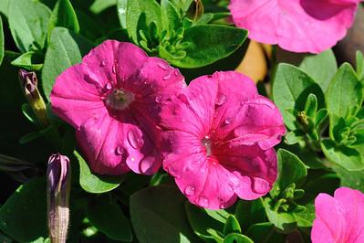Shangri La Botanical Garden,Orange,Texas.3-26-2010