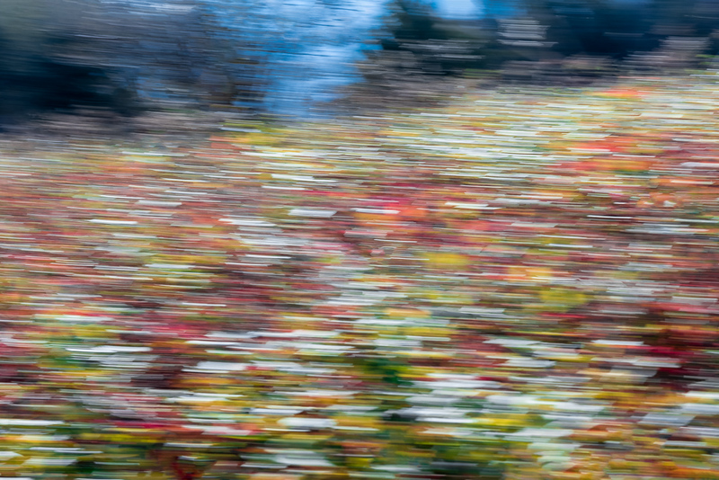 Colorful Fall Ground Cover - Camera Panning